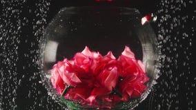 Transparente runde Schüssel mit den künstlichen Blumen nach innen unter dem Wasser auf dem schwarzen Hintergrund Unterwassersch?n stock video footage