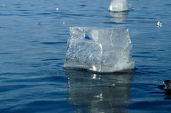 Transparente Stücke Eis Lizenzfreies Stockfoto