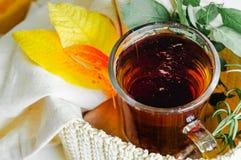 Transparente Tasse Tee braute mit angrenzenden hölzernen Löffeln Zimt vollständig Frische Erdbeeren und Tee auf Porzellanporzella stockbild