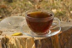 Transparente Tasse Tee stehend auf dem Stumpf Lizenzfreie Stockbilder