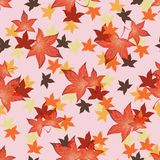 Transparenter Autumn Leaves Lizenzfreie Stockfotos