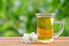 Transparenter Becher Tee mit Jasmin auf einem Hintergrund des Grüns, Sonnenlicht Nahaufnahme Stockfotografie