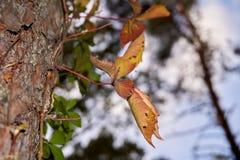 Transparenter bunter Herbstlaub stockfotos