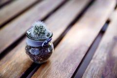 Transparenter Glastopf mit Kaktus lizenzfreie stockfotografie