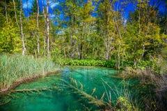 Transparenter See im Nationalpark Plitvice Lizenzfreies Stockfoto