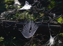 Transparentes Spinnennetz in der Hintergrundbeleuchtung im Wald stockfoto