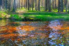 Transparentes Wasser im Holz Lizenzfreie Stockfotos