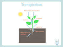 Transpiration of plant. Colorful illustration on white stock vector. For education royalty free illustration