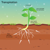 Transpiration of a plant Stock Image