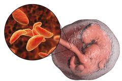 Transmission of Toxoplasma gondii parasites to fetus, medical concept. Transplacental transmission of Toxoplasma gondii parasites to human embryo, medical Royalty Free Stock Photography