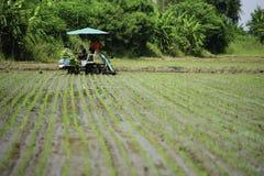 Transplant rice seedlings machine Stock Images