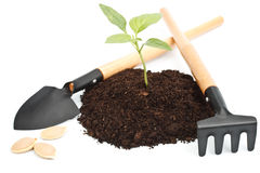 Transplant of a tree Stock Image