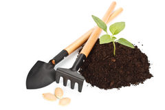 Transplant of a tree Royalty Free Stock Image