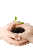 Transplant of a tree female and childrens hands Stock Images