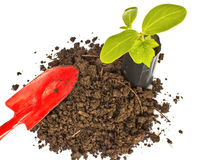 Transplant of a tree and garden tools Royalty Free Stock Photo