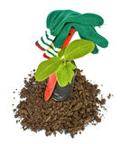 Transplant of a tree and garden tools Royalty Free Stock Photos