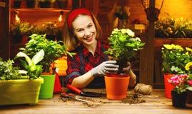 Transplantações felizes do jardineiro da mulher e flores molhando Fotografia de Stock Royalty Free