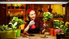 Transplantações felizes do jardineiro da mulher e flores molhando Fotos de Stock