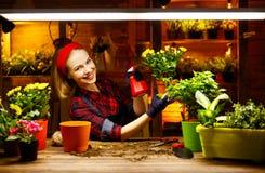 Transplantações felizes do jardineiro da mulher e flores molhando Imagens de Stock Royalty Free