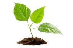 Transplantatie van een boom Stock Foto
