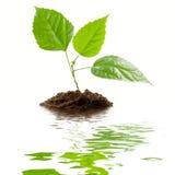 Transplantatie van een boom royalty-vrije stock afbeeldingen