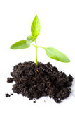 Transplantatie van een boom stock afbeeldingen