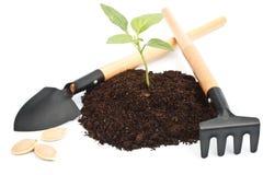 Transplantatie van een boom stock afbeelding