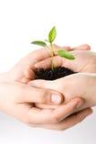 Transplantatie van een van boomwijfje en kinderen handen Royalty-vrije Stock Foto's