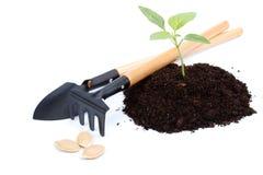 Transplantation eines Baums Lizenzfreies Stockfoto