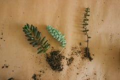 Transplantera växter in i nya krukor royaltyfri foto
