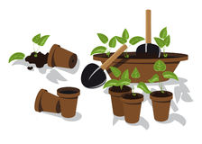 Transplanting flower seedlings Stock Images