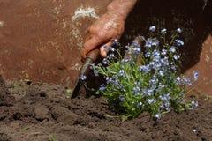 Transplanting flowers Stock Photo
