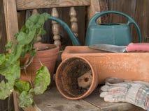 Transplanting indoor plants Royalty Free Stock Image