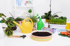 Transplanting indoor plants. Flower transplantation. Care of domestic plants. Still life Royalty Free Stock Photo
