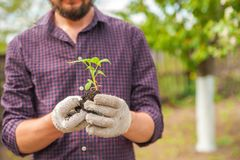 Free Transplanting Plants Illustration Of Procedures And Tools For Caring For Indoor Plants. Soil Preparation. Care Of New Life - Water Royalty Free Stock Photos - 160725508