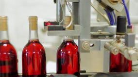 Transportör med flaskor av rött vin Flaskorna stängs med proppar lager videofilmer