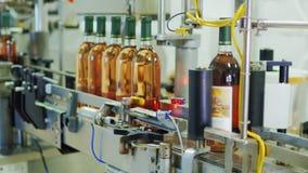 Transportören i vinodlingen Den automatiserade linjen - klistra klistermärkear på flaskorna av vin stock video
