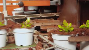 Transportörlinje i ett modernt växthus, växthus med en automatiserad transportör, blommor i krukor på en transportör arkivfilmer