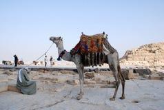 Transport in Ägypten Lizenzfreie Stockfotos