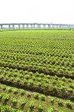Transport and agriculture. Well-developed agriculture can not be separated from good transport facilities Stock Photo