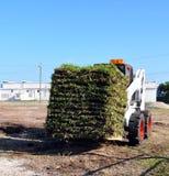 Transport de l'herbe fraîche de gazon Images libres de droits