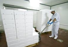 Transport des cadres de polystyrène Photos libres de droits