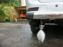 Transport des poissons sous la voiture de butoir photos libres de droits