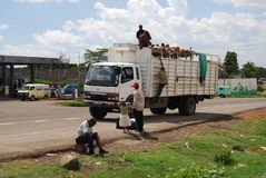 Transport at the east Africa in Kenya Royalty Free Stock Image