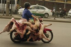 Transport of fresh pork. Everywhere and at all hours to Vietnam, we can cross a motorcycle loaded pork. The health standards if they exist are not enforced Stock Photo