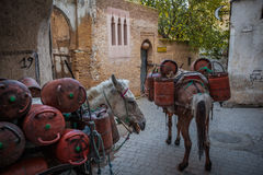 Transport of gas bottles in the medina, Fez Royalty Free Stock Images
