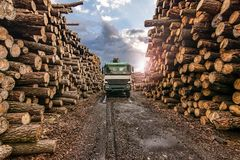 Transport of pine logs in a sawmill royalty free stock photo