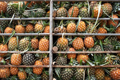 Transport of pineapple Stock Images