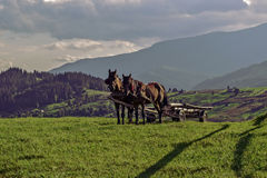 Transport. On the slopes of the Carpathian Mountains Stock Photography
