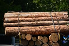 Transport stacked chopped wood logs renewable energy on flat back lorry truck stock image